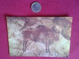 SPAIN POSTAL POSTCARD POST CARD CARTE POSTALE CANTABRIA CUEVAS DE ALTAMIRA SANTILLANA DEL MAR BISONTE BISON BUFFALO ? - Animales