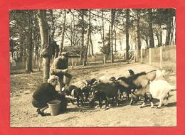 """Carte Photo 1967  Parc Aux Bêtes  Etretat """"repas Des Chèvres """"personnages - Etretat"""