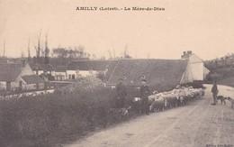 AMILLY -- La Mère De Dieu - Troupeau - Amilly
