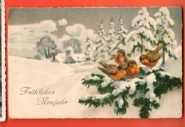 EBH-26  Fröhliches Neujahr, Vögel, Oiseaux. Circulé En 1925 - Nouvel An