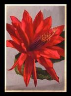Deutschland / Germany: Ansichtskarte [AK] 'Kakteenblüte' / Postcard 'Cactus', Ungebraucht / Unused - Cactus