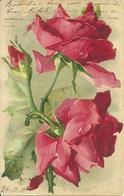 "Illustrazioni, Illustratori, ""Rose"", Catharina Klein - Klein, Catharina"