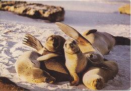Ecuador Postcard Sent To Denmark 19-12-1986 (Tame Sea-lions At Galapagos Islands) - Ecuador