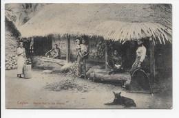 Ceylon - Native Hut In The Interior - Plate 294 - Sri Lanka (Ceylon)