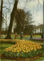 NETHERLANDS - KEUKENHOF - PENTOTHAL SODIUM - ADVERTISING POSTCARD 1950s (BG1859) - Lisse