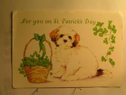 Fêtes - For You On St Patrick's Day - Chien - 177 Mm X 122 Mm - Saint-Patrick