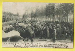 * Torhout - Thourout * (D.V.D. 8917, Uitgever Th. Samyn De Borchgrave) Sint Pietersfeest Op De Peerdemarkt, Cheval Paard - Torhout