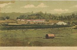 St Vincent Agricultural School No 19  Edit H. And Co St Vincent Undivided Back - Saint-Vincent-et-les Grenadines