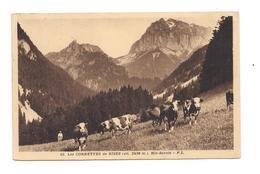 LES CORNETTES DE BISES - ALPAGE VACHES - (Pocalet) - Autres Communes