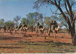 Australia Postcard Sent To Victoria 16-2-1968 (Australian Aborigines On Walkabout) - Aborigines