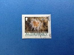 2006 ALDERNEY 40 ORDINARIO CORALLI ANEMONE - Alderney
