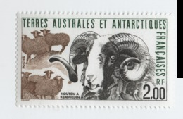 VP8L4 TAAF FSAT Antarctique Antarctic Neufs°° MNH Faune Mouton 1989 N°141 - French Southern And Antarctic Territories (TAAF)