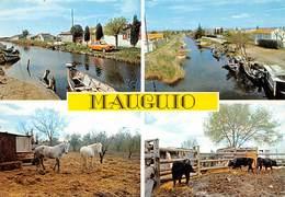 Mauguio - Les Cabanes - Chevaux - Taureaux - Mauguio