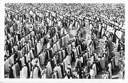 Afrique >  SENEGAL  DAKAR  Prière à La TABASKI (Religion Aïd Al-Adha Islam) (Collection Labitte Dakar 63)  *PRIX FIXE - Senegal