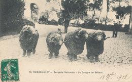 A M  24 / CPA   RAMBOUILLET      (78)  BERGERIE  NATIONALE  UN GROUPE DE BELIERS - Rambouillet