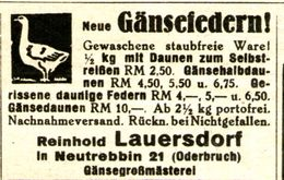 Original-Werbung/ Anzeige 1938 - GÄNSEFEDERN / LAUERSDORF - NEUTREBBIN (ODERBRUCH) - Ca. 45 X 35 Mm - Publicités