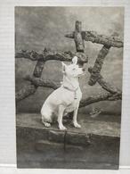 Photo Chien. Lefebvre. Calais. 1909 - Photographs