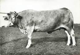 """/ CPSM FRANCE 47 """"Agen, Herd Book De La Race Bovine Blonde D'aquitaine"""" / VACHE - Boulogne Sur Mer"""