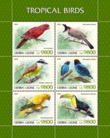 Sierra Leone 2018 Tropical Birds Fauna  S201811 - Sierra Leone (1961-...)