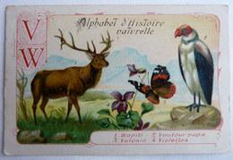 CHROMO EDUCATIF ALPHABET D'HISTOIRE NATURELLE - W - W Wapiti Vautour Papillon Vulcain Violettes - Chromos