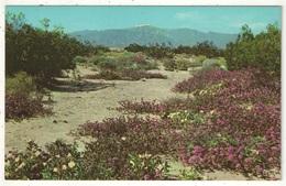 Springtime On The Desert, Nevada - Etats-Unis