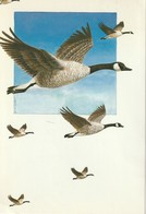 Change Of Address Card Canada  Canada Goose - Other