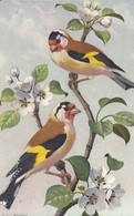 193 - Uccelli - Birds