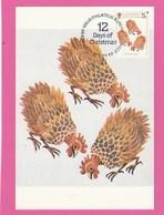 Carte Maximum - Oiseaux - Poules - Guernesey - Christmas 1984 - Gallinaceans & Pheasants