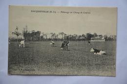BACQUEVILLE-paturage Au Champ De Courses-troupeau De Vaches - Other Municipalities