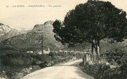 CORSE(CALENZANA) ARBRE - France