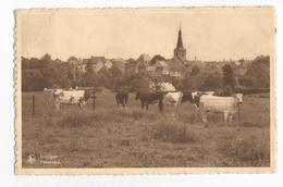 Jodoigne Panorama Carte Postale Ancienne - Jodoigne