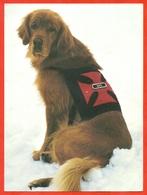 USA 1993. - Dogs
