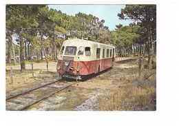 Train Chemins De Fer Corses Calvi Dans La Pinède Juillet 1975 Autorail Billard A80D CPM Carte Non Voyagée - Trains