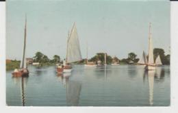 Postcard - South Walsham Broad, Norfolk Broads - Unused Very Good - Postcards