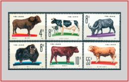 Cina China 1981 - Cat. 2421/26 (MNH **) Animali Bovini - Bovine Animals (008078) - 1949 - ... Repubblica Popolare