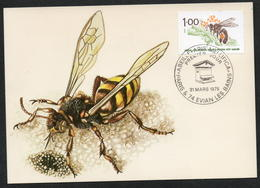 CARTE MAXIMUM ABEILLE - Honeybees