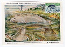 CARTE MAXIMUM - NIGER - LE LAMANTIN - 1963 - Niger (1960-...)