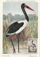 CARTE MAXIMUM - NIGER - Oiseaux : Jabirou Africain - 1961 - Niger (1960-...)