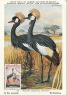 CARTE MAXIMUM - NIGER - Oiseaux : La Grue Couronnée - Niger (1960-...)