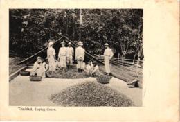 TRINIDAD DRYING COCOA ,BEAU PLAN ANIME   REF 58318 C - Trinidad