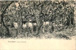 TRINIDAD COCOA PICKING,JOLI PLAN ANIME   REF 58321 C - Trinidad