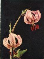 DOS FLORES DE LIRIO DE TIGRE / TWO TIGER LILIUM FLOWERS - POSTAL POSTCARD -LILHU - Bloemen