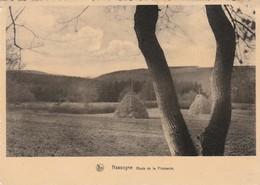 Nassogne En Ardenne ,  Route De La Flamande - Nassogne
