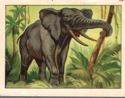 CHROMO BON POINT OFFERT PAR LE LION NOIR  L'ELEPHANT - Trade Cards