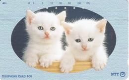 TARJETA DE JAPON DE DOS GATOS  (CAT-CHAT-GATO) - Japón