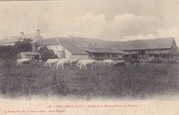 02  VIEIL ARCY .CPA RARETE. LA FERME DE LA MAISON NEUVE.LA PRAIRIE  ANNEE 1906. ELEVAGE - France