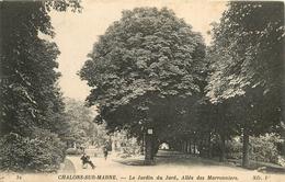 CHALONS SUR MARNE JARDIN DU JARD ALLEEE DES MARRONNIERS - Châlons-sur-Marne