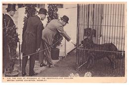 Romania Regalitate Royal King Of Romania At The Newfoundland Pavilion British Empire Exhibition Wembley Dog - Roumanie