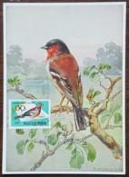 Hongrie - Carte Maximum / CM 1952 - Faune / Oiseaux / Pinson - Tarjetas – Máximo