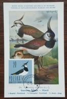 Pologne - Carte Maximum / CM 1964 - YT N°1347 - Faune / Oiseaux  / Vanneur Huppé - Cartes Maximum